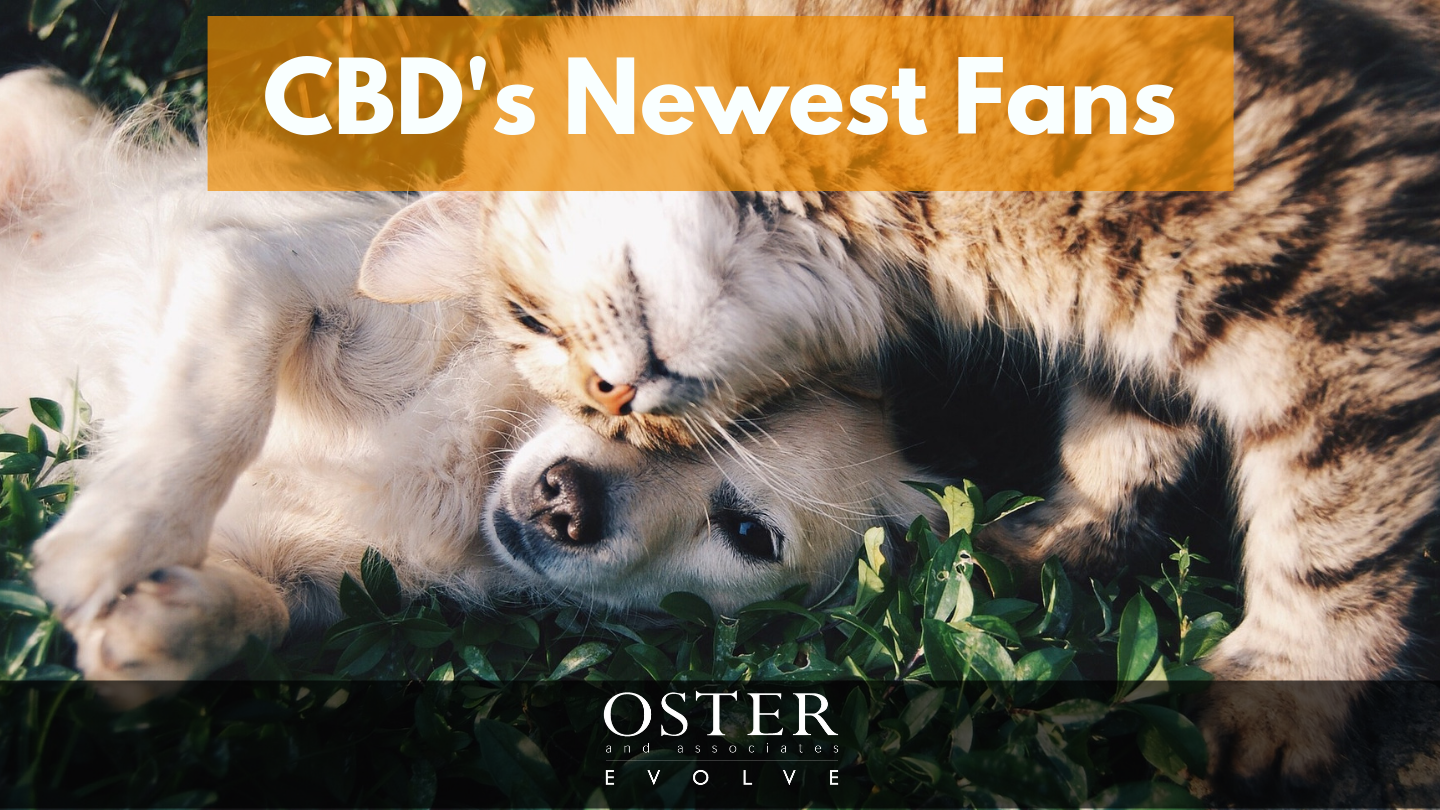 CBD's Newest Fans