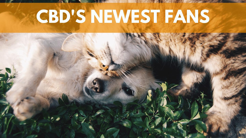 CBD's Newest Fans