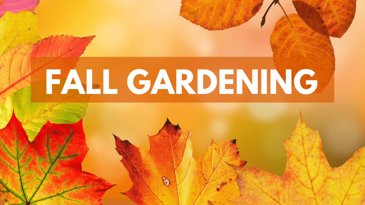 Fall Gardening with Armstrong Garden Centers