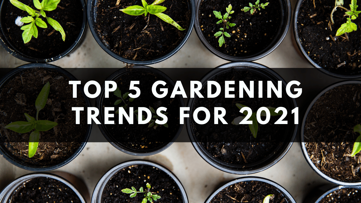 Top 5 Gardening Trends for 2021